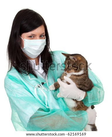 female vet in protective uniform and medical mask with cat in surgery