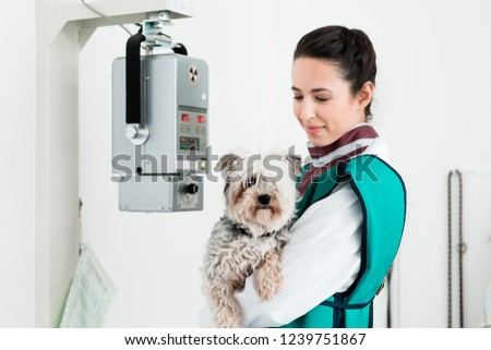 Female veterinarian carrying sick puppy in x-ray room #1239751867