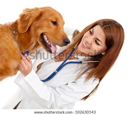 Female veterinarian checking a dog - isolate dover a white background