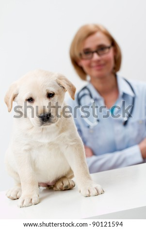 Female veterinary and beautiful labrador puppy