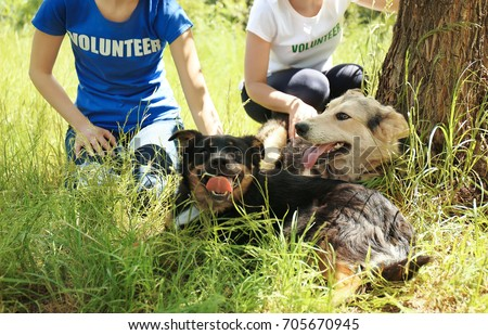 Female volunteers sitting on grass and petting homeless dogs from shelter #705670945