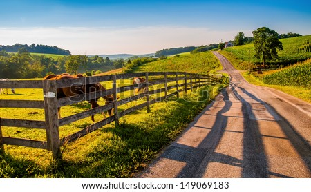 Fence and horses along a country backroad in rural York County, PA.