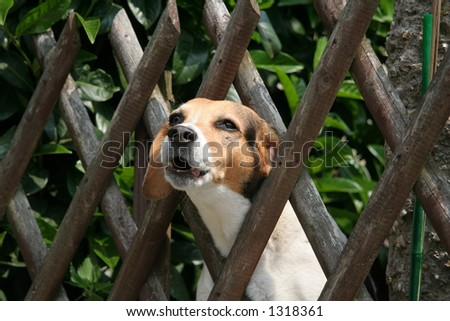 fence and howling dog
