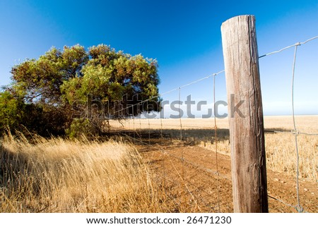 Fence and Tree in rural Australia
