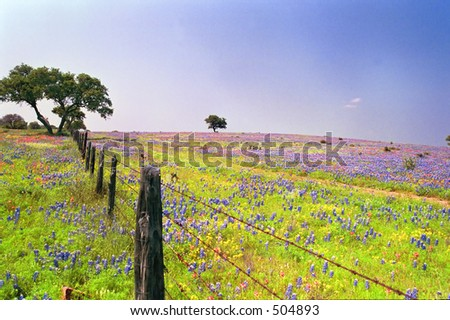 Fence by Wildflowers - some grain