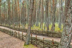 Fence made of wooden rods in the forest. Wicker fence made of twigs