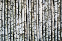 Fence made of young birch tree boles.