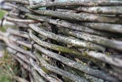 Fence of old dry twigs. Background wood. Vintage. Selective focus on a middle part of image. Bokeh effect.