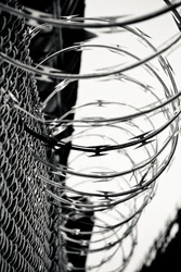 Fence with coiled barbed wire