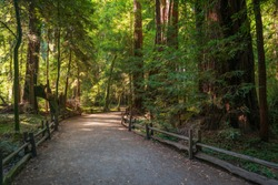 Fenced Walking Trail at Henry Cowell Redwoods State Park