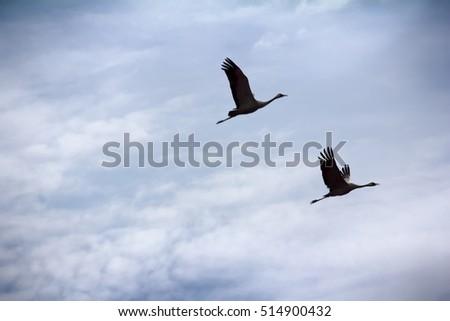 fender to fender. gray crane ...