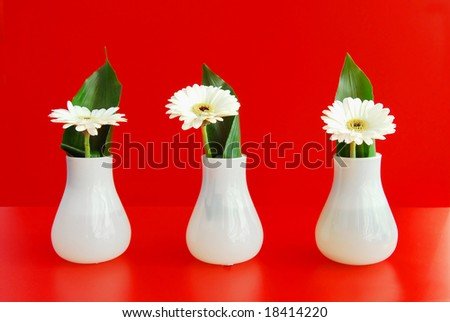Feng shui decoration with 3 white flowers in vases on red background