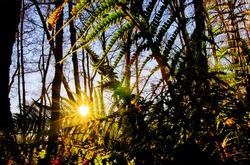 Fenland Fern Sunshine rays light up