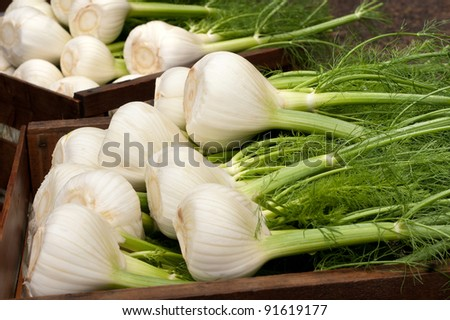 Fennel Bulbs with Edible Green Stems and Leaves, Recently Cut from the Field in Wood Crates, Ready for Market or Eaten Cooked or Uncooked, Raw.