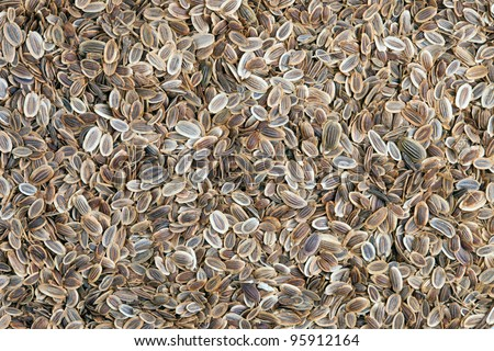 Fennel seeds (Anethum graveolens) background texture full frame. The plant is used in medicine, in perfumery and cosmetics.