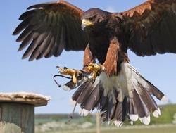 Fenton Bird of Prey Centre Wooler Northumberland England Uk and its birds