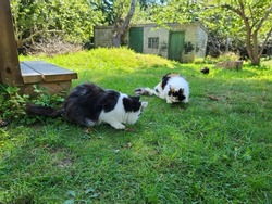 Feral cats eating cat treats in the grass.