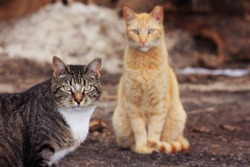 Feral Cats Hoping and Waiting to be Fed