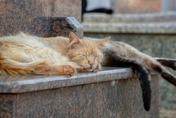 Feral domestic cat abandoned in cemetery with selective focus