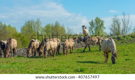 Feral horses in nature in spring #407657497