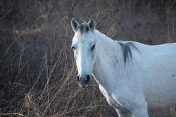 Feral white horse in Guerrero, Mexico