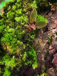 Fern and moss on moss tree.moss on tree bark log in deep forest.