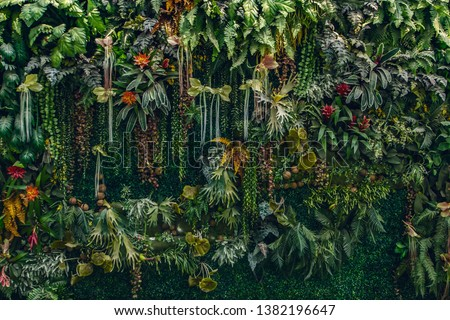 fern and plant decorate on wall #1382196647