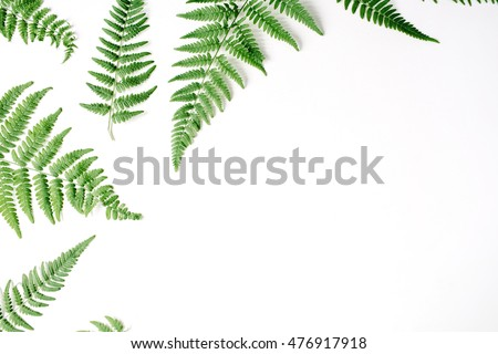fern branches pattern isolated on white background. flat lay, top view #476917918