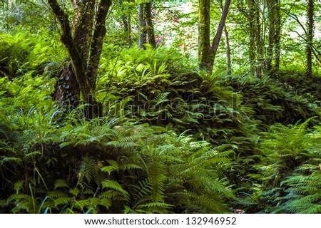 Fern Forest, Batumi Botanical Garden, Georgia #132946952