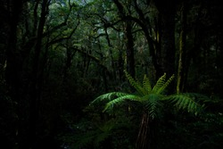 Fern forest in milfordsound, New Zealand