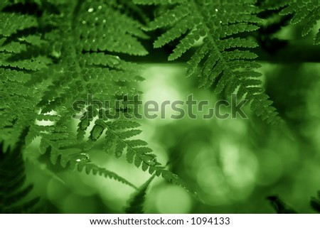 fern fronds dripping with water - duotone