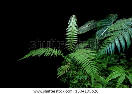 Fern fronds, philodendron leaves (Philodendron gloriosum) and tropical foliage rainforest plants bush on black background. #1504195628