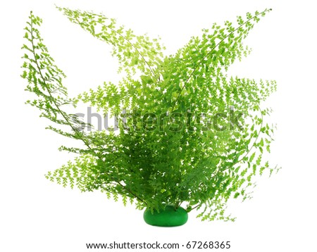Fern green leaves bush isolated on white