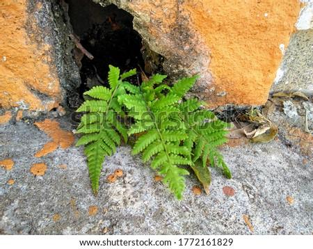 fern growing between the damp walls translate