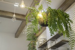 Fern in plant pot hanging on ceiling, stock photo