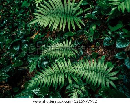 fern in rainforest #1215977992