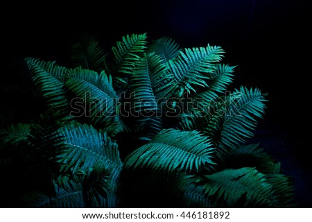 Stock Photo Fern in the moonlight