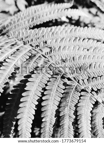 Fern leaf closeup and top view. Leaves textures. It is what you can see in the forest and jungle. Black and white image.