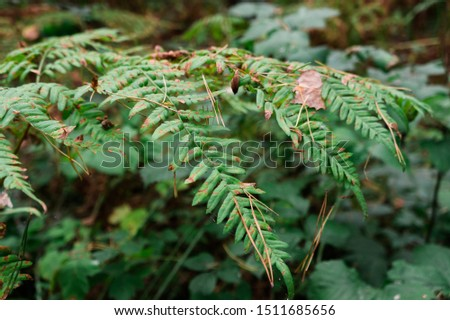 Fern leaf closeup in the forest. Closeup with blurred background.