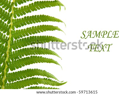 Fern leaf isolated on a white background