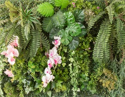 Fern leafs, orchid flower and plants were decorated on the backdrop wall in dense rainforest tropical style. It looks greenery and comfortable for decorating in indoor space to give nature feeling.