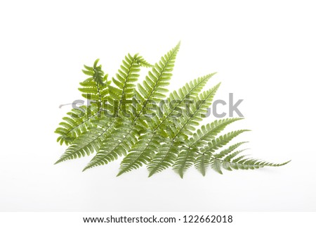Fern leaves #122662018