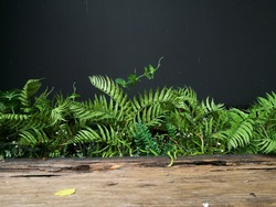 Fern leaves and wood table isolated with dark Gray wall background