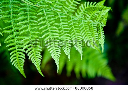 Fern leaves at Point Reyes National Park