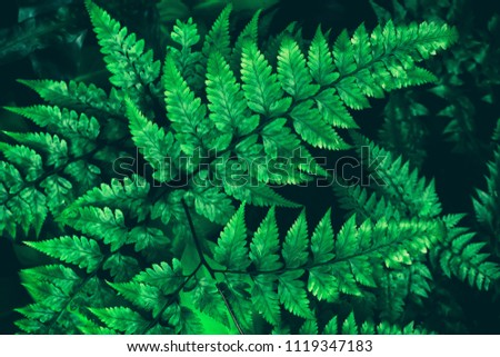 fern leaves, dark green foliage in rainforest #1119347183