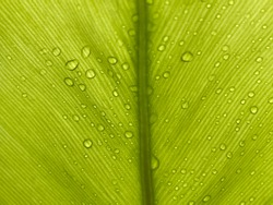 Fern leaves, lush green leaves, leaf patterns water droplets on top, nature isolated