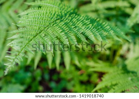 fern leaves, macro leaves, fern leaves background #1419018740