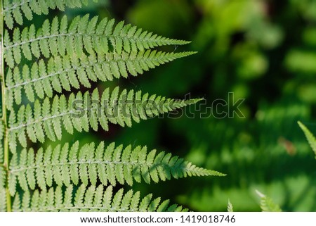 fern leaves, macro leaves, fern leaves background #1419018746