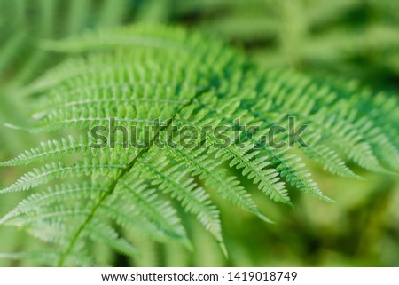 fern leaves, macro leaves, fern leaves background #1419018749
