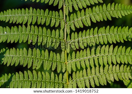 fern leaves, macro leaves, fern leaves background #1419018752